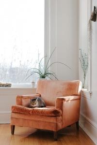 Velvet pink chair vintage look